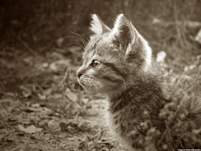 Kitty by Panka2009