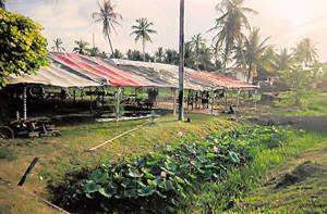 In Guyana