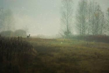 Autumn by PatykKamyk
