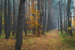 Autumn wanderings