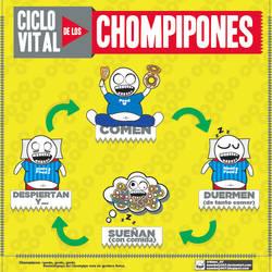 Ciclo vital del Chompipon