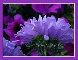 purple mania by Batss
