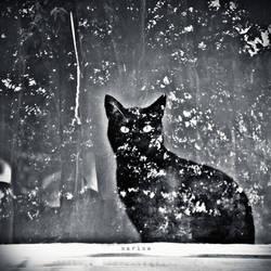 Black Cat by MarinaCoric