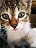 Baby Kitty by MarinaCoric