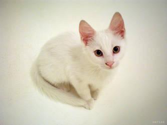 Gato Blanco by MarinaCoric