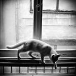Cat on the Window by MarinaCoric