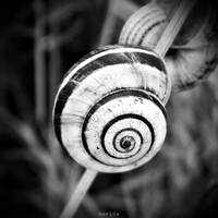 Snail by MarinaCoric