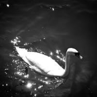 Swan II by MarinaCoric