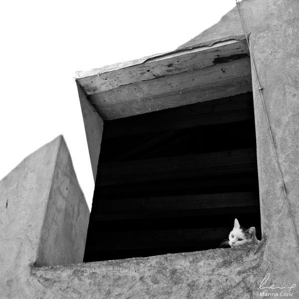 Rear Window by MarinaCoric