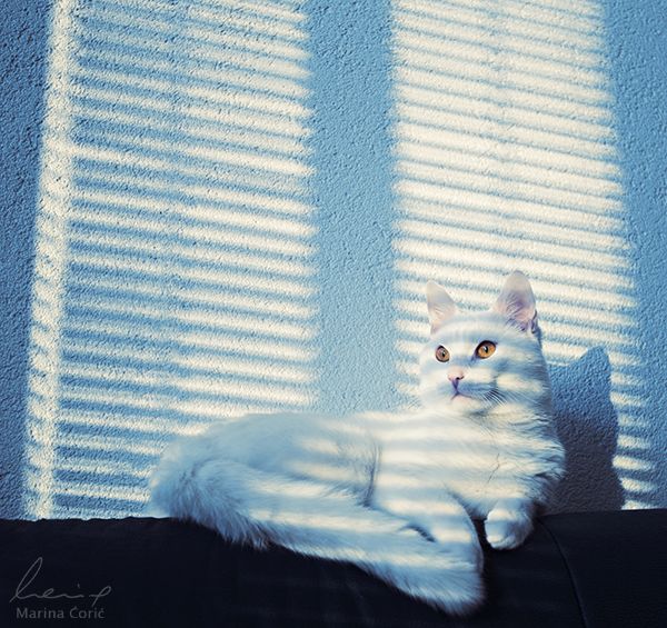 Lounge by MarinaCoric