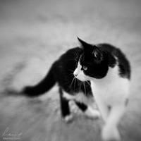 Street Cat by MarinaCoric
