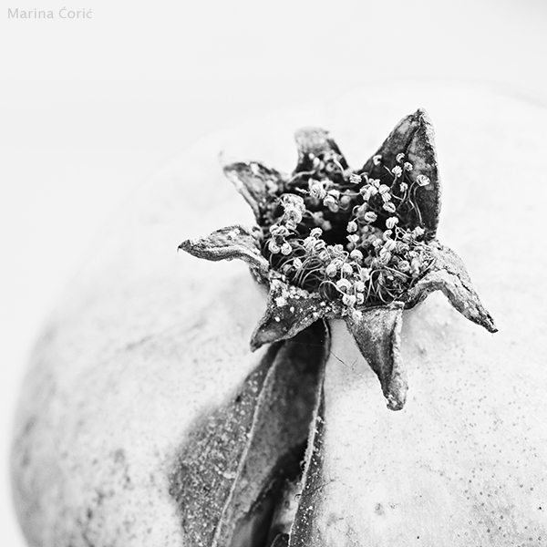 Pomegranate by MarinaCoric