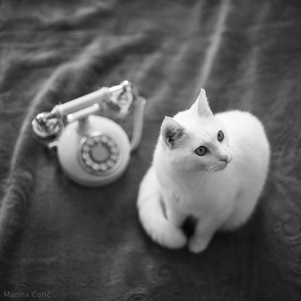 Retro Cat by MarinaCoric