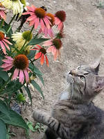 The Cat and the Flowers by Xena-Heart