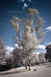 Infrared tree 2 by Alharaca