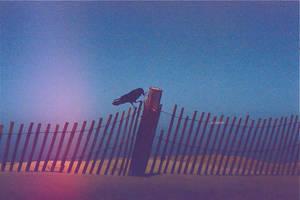 iPhoto crow