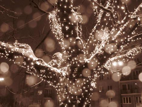 20winter12_tree of light