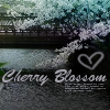 Cherry Blossom by left-for-yesterday