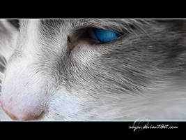 eye of the cat by royov