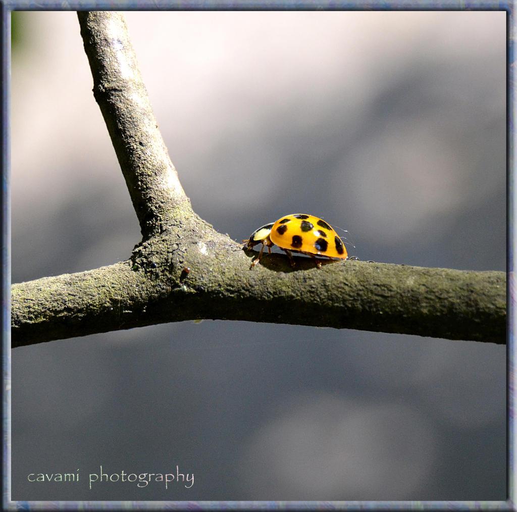 Yellow Ladybug by CaryAndFrankArts