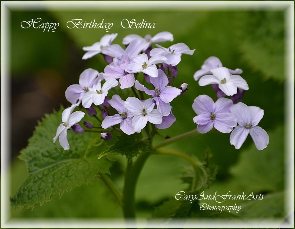 Happy Birthday Selina by CaryAndFrankArts