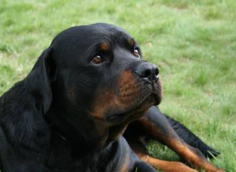 Aron The DOG by atariendottk