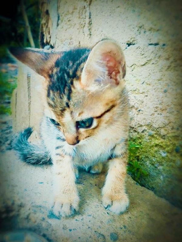 My Kitty  by CutieeBruteeee