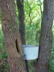Bucket in tree