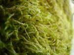Moss Texture 1