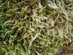 Moss Texture 2