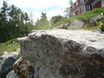 Rock Ledge Macro 1