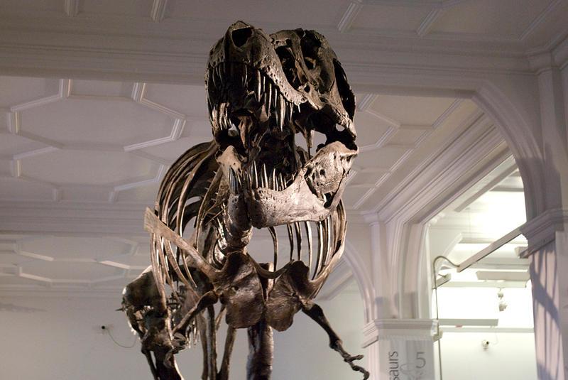 T-Rex 01 by captain-stu