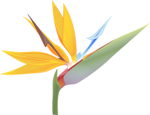 Orange Bird of Paradise - Strelitzia reginae