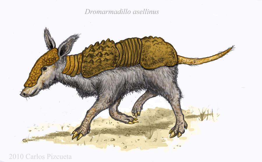 Tatu burro - Neocene Project