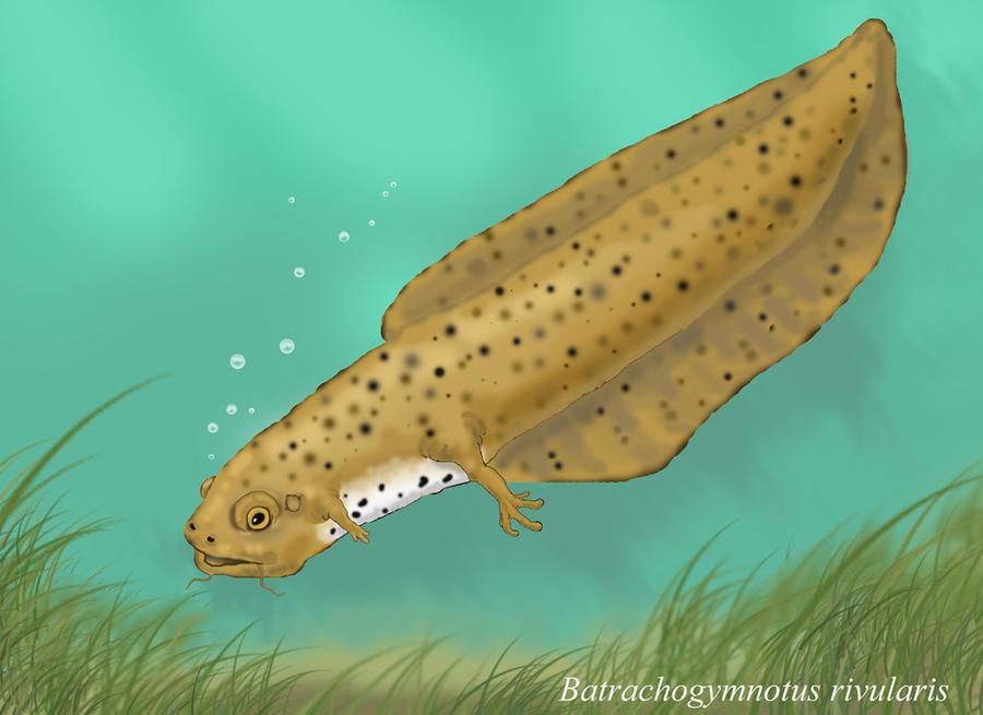 Batrachogymnotus - Neocene Project