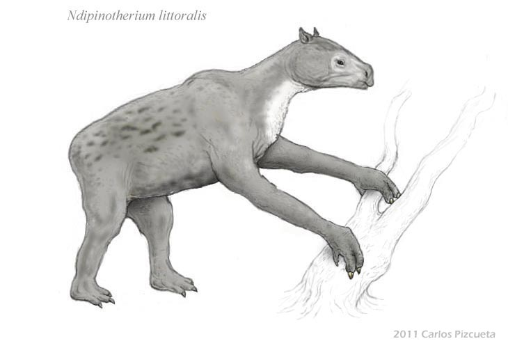 Coastal ndipinotherium - Neocene Project