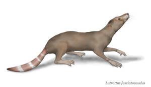Otterrats -Lutrattidae-