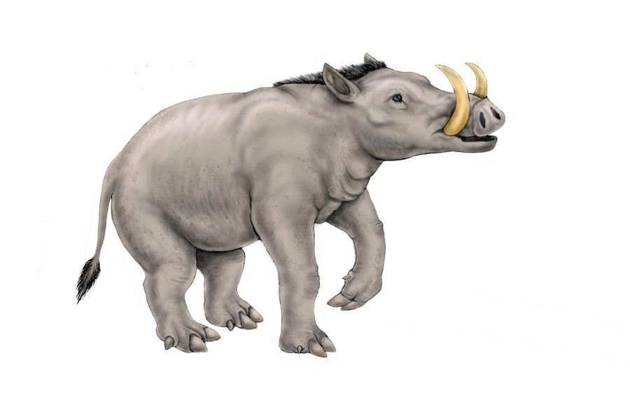 Boaropotamus - Neocene Project