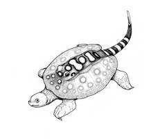Stingray turtle