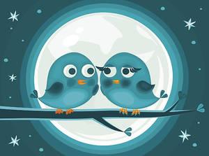 birds lovers
