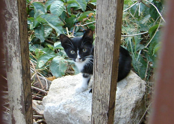 Cats of Rhodes 3