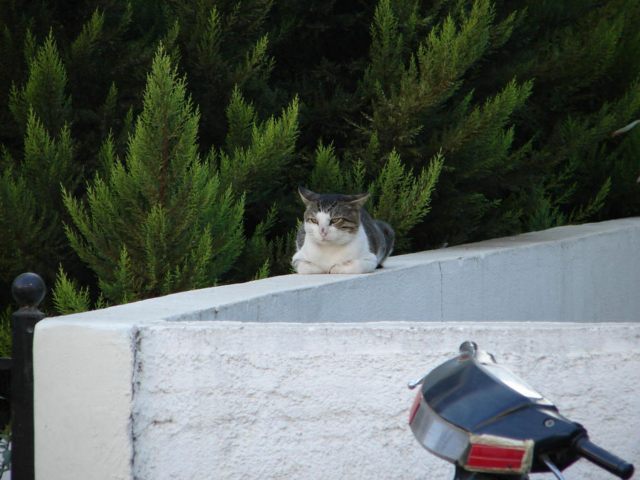 Cats of Rhodes 10