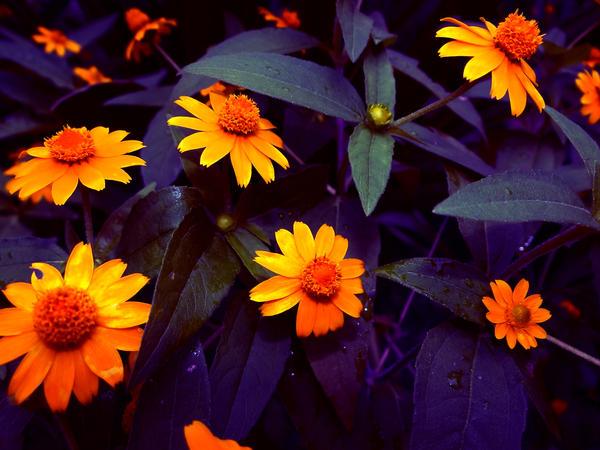 Brighten Your Day by LashelleValentine