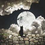 A Cat's Nine Lives