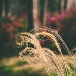 Nature's Swirls