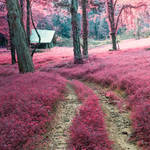 Tutorial! .Follow the Trail. by LashelleValentine