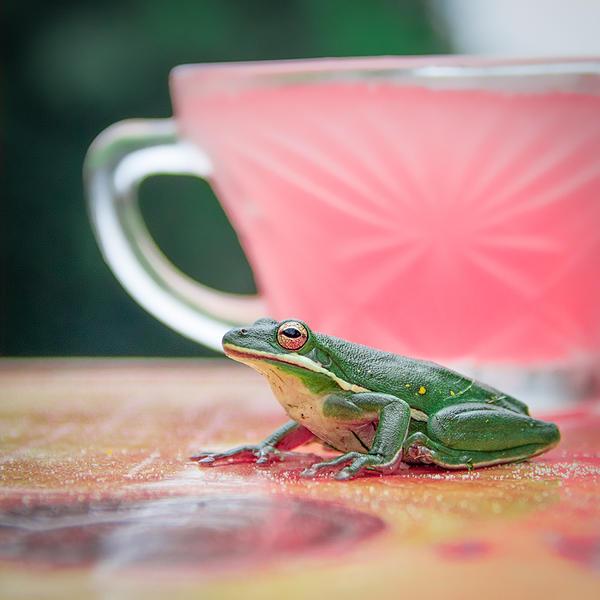 Pink Lemonade by LashelleValentine
