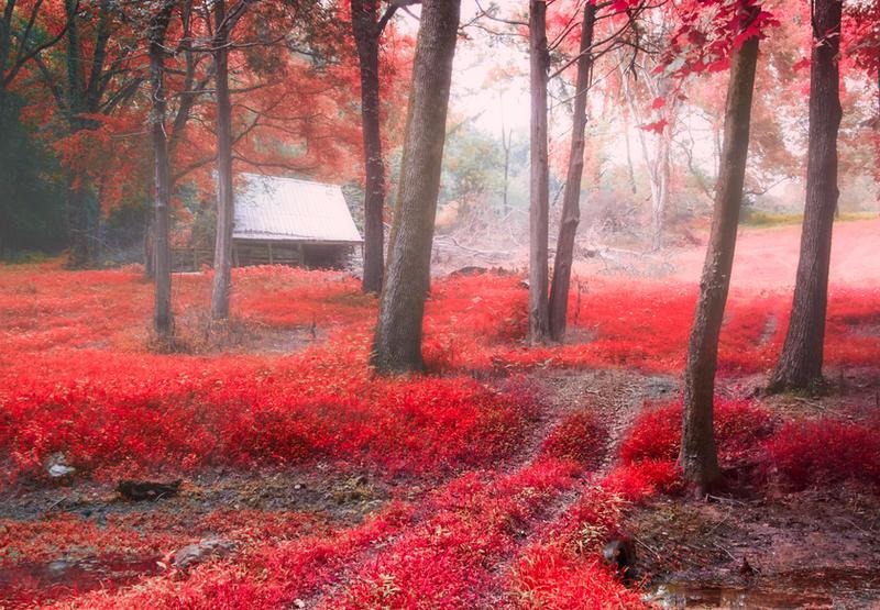 Red Mist by LashelleValentine