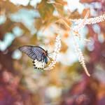Butterfly Garden IV