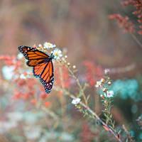 Butterfly Garden V by LashelleValentine